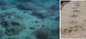 Estromatolitos y huellas de dinosaurios
